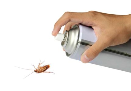 eliminare scarafaggi in casa